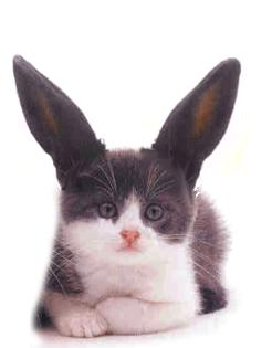 Cat With Rabbit Ears