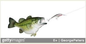 fishlure